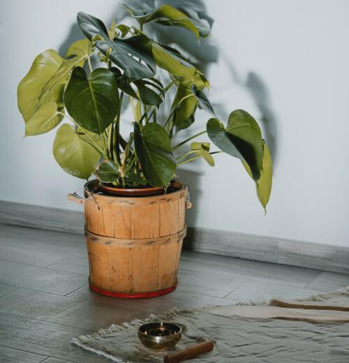 Planta del piso superior
