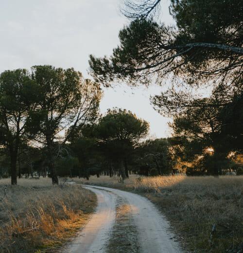 Caminos de San Vicente de Arévalo