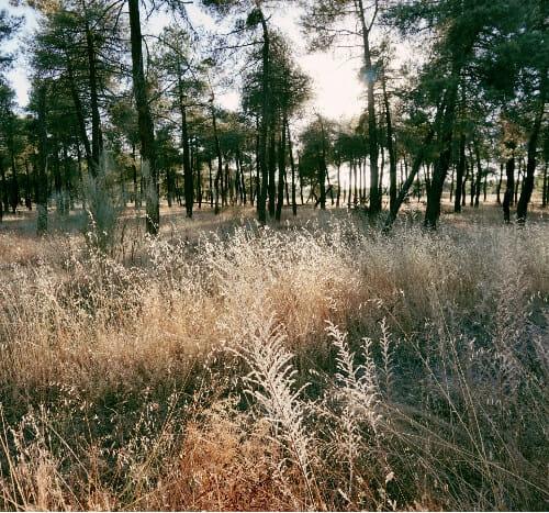 Foto del entorno